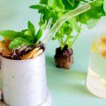 Pineapple Mint Maui Mule